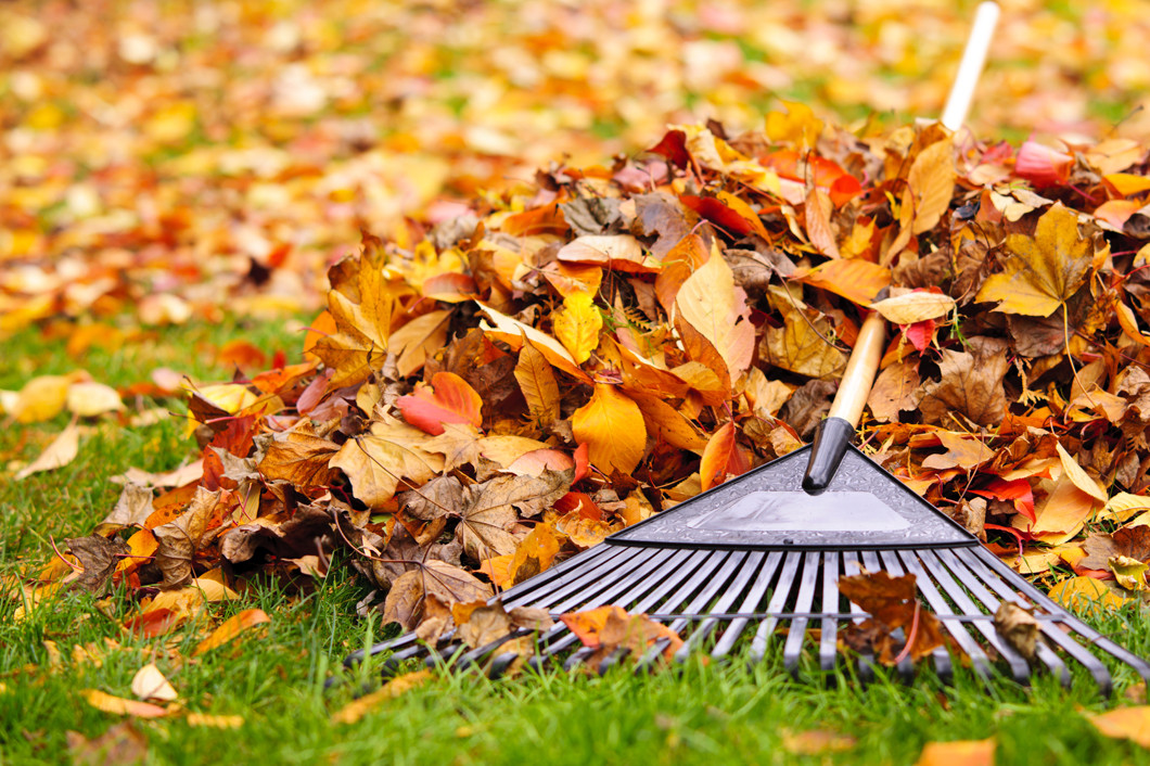 Prepare Your Yard for Fall and Winter